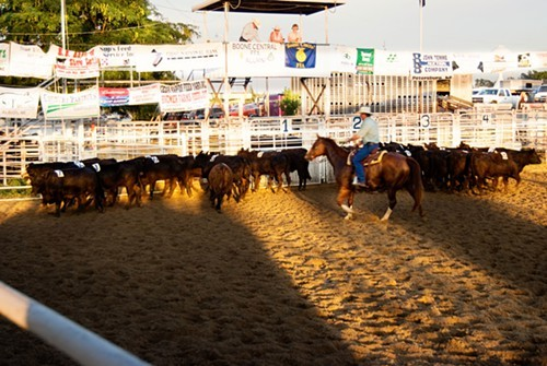 Team penning in Albion