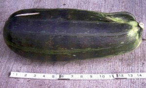 The zucchini/defensive weapon