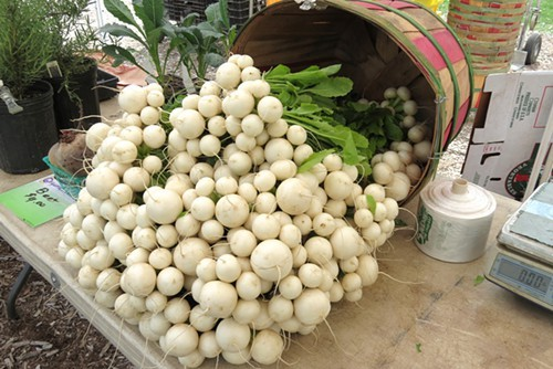 Turnips at the Green City Market - MYLES GEBERT
