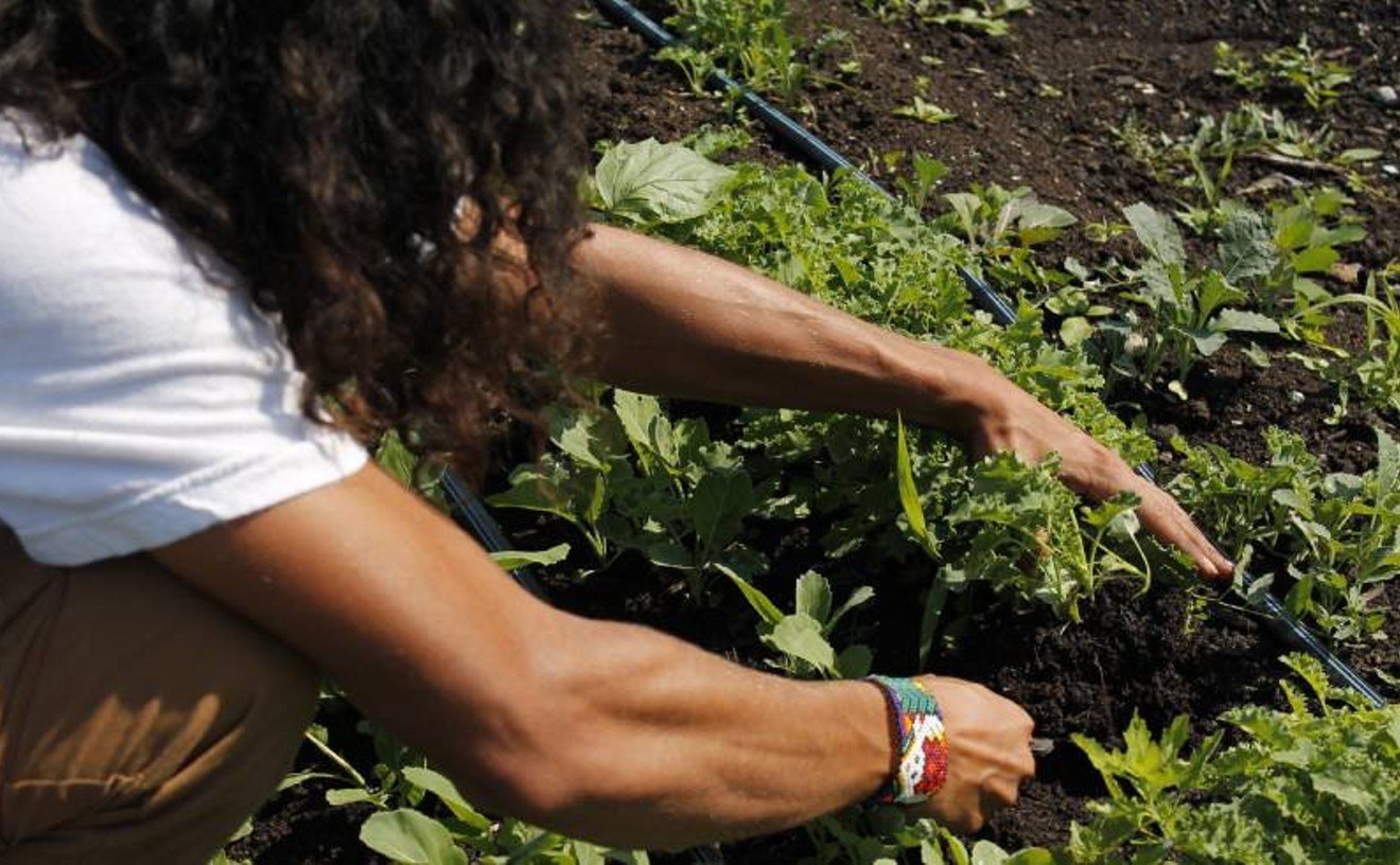 Amid COVID-19, Urban Growers Collective distributes nearly one million pounds of produce
