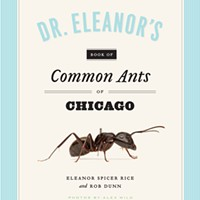 Beneath Chicago lies an entire second city of ants