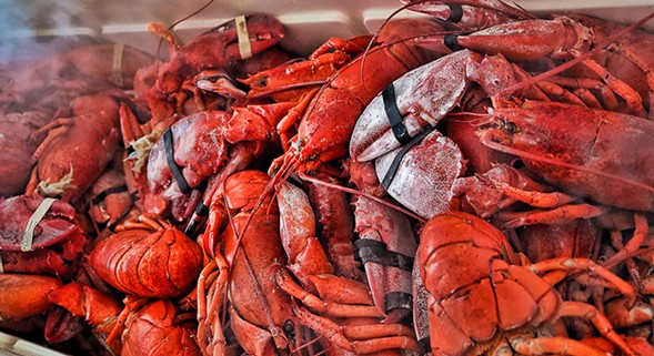 Crack some shells at the Great American Lobster Fest. - JOE HOUSTON OF THE FOXHOLE CHICAGO