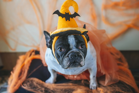 Howl-O-Ween Bash - GETTY IMAGES/ISTOCKPHOTO