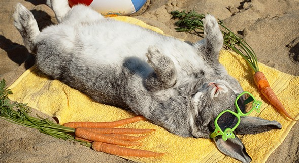 Support Red Door Animal Shelter and save a bunny's life at Rabbit Fest on Tue 11/29. - GETTY IMAGES/ISTOCKPHOTO