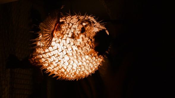 A pufferfish lamp lights the way. - KERRI PANG