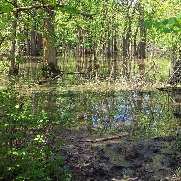 Scenes from LaBagh Woods, including the oxbow slough. - VINCE CERASANI