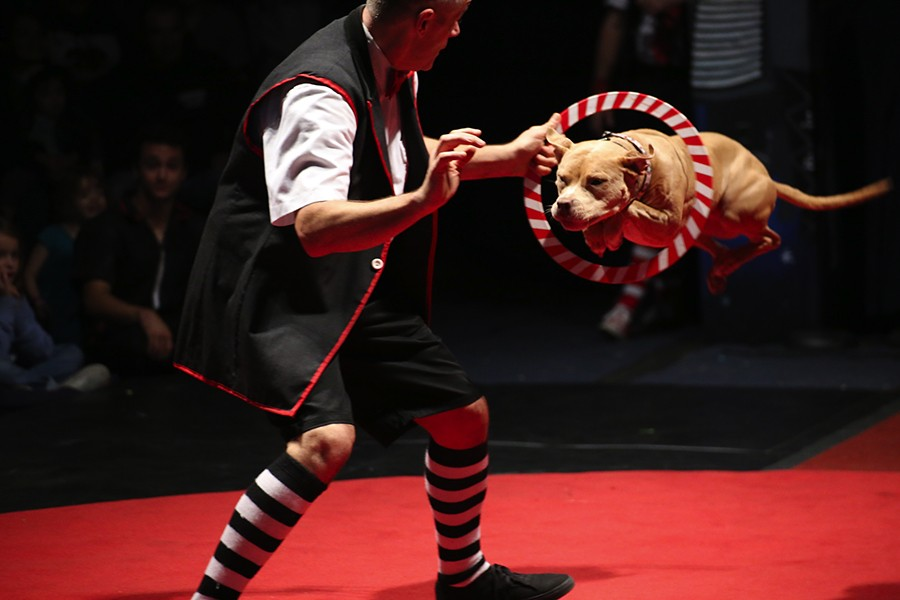 Jeff Jenkins and Rosie, the most ferocious beast at Midnight Circus - LAURA COLLINS BRITTON