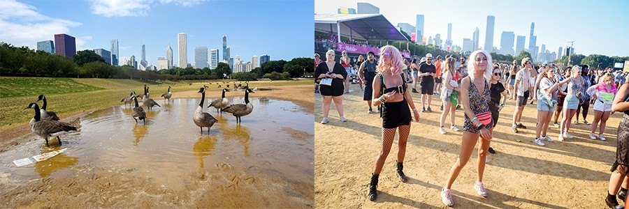 Grant Park (left) August 13, 2019:  Baseball fields on the south lawn of Grant Park were home to Canadian geese. (right) August 4, 2019: Baseball fields on the south lawn of Grant Park were home to Lollapalooza Festival attendees watching Kasey Musgraves. - KATHLEEN HINKEL