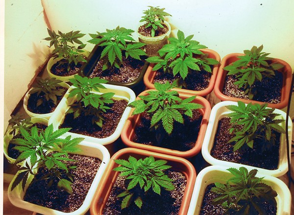 The cannabis cultivation center would give people of color access to the most lucrative part of the business. - A7NUBIS