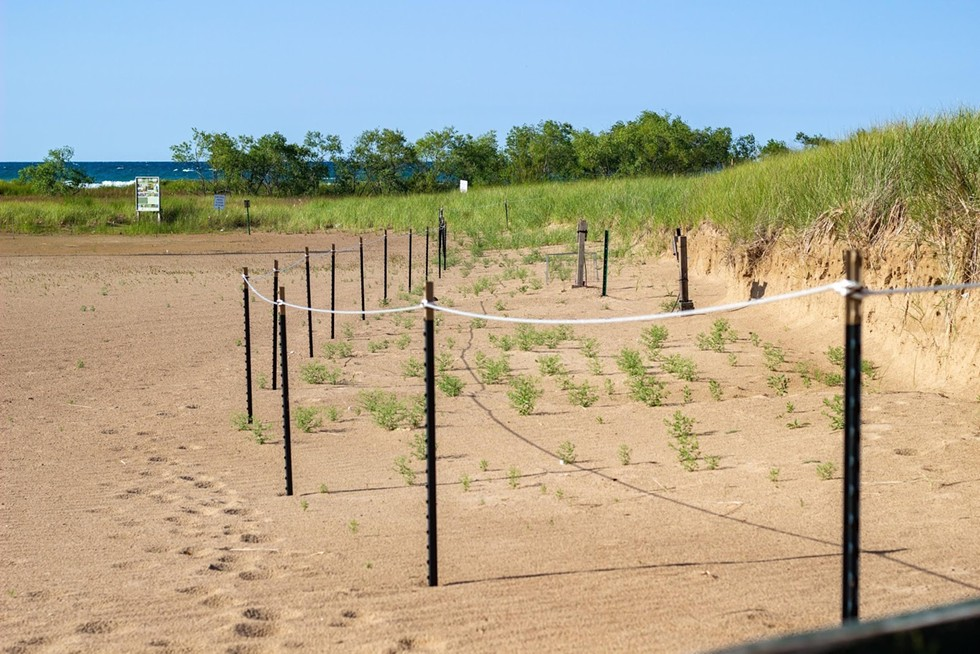 Temporary fencing was placed around the dunes to protect the nesting piping plovers. - KELSEY VLAMIS