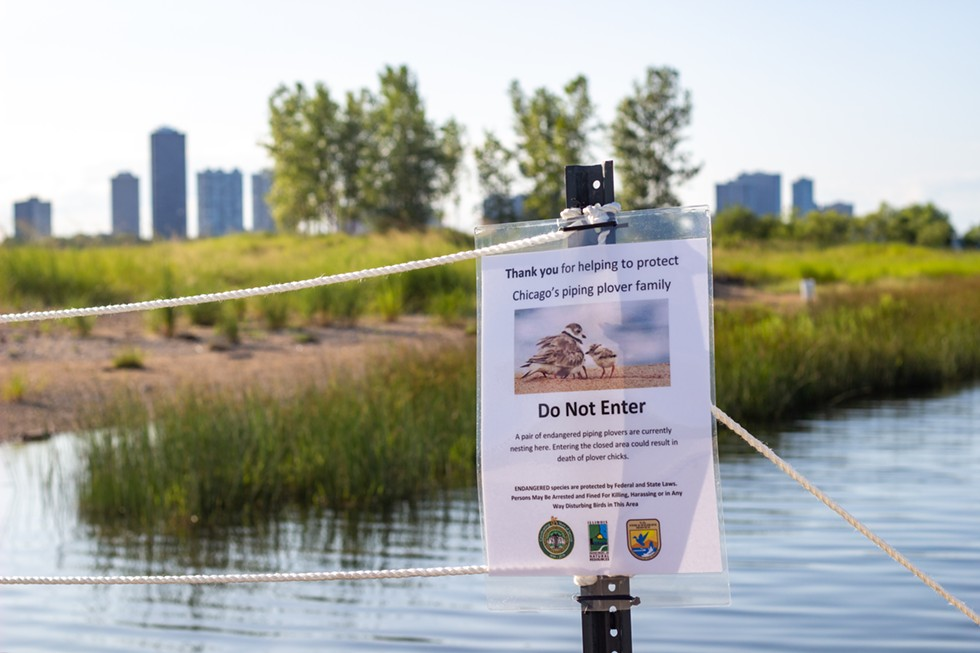 Federal, state and city agencies, as well as local organizations, participated in efforts to protect the piping plovers. - KELSEY VLAMIS