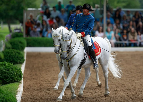 tempel_lipizzans-the_quadrille-1.jpg