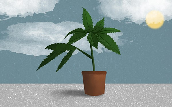 Cannabis has been happily growing outdoors unaided for thousands of years.