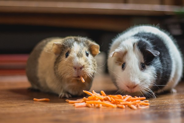 Guy Fieri and Sammy Hagar made a tequila together but these are guinea pigs.