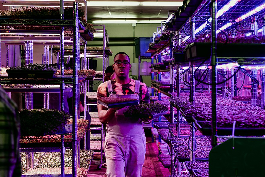 Damiane carrying microgreens to be harvested - RYAN EDMUND