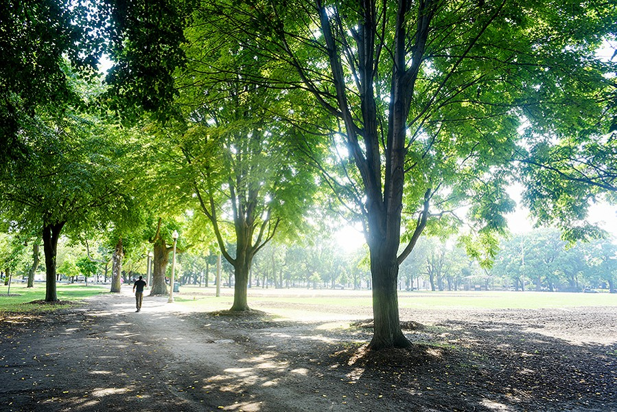 August 13, 2019: A person wanders through a grove of trees in Union Park. - KATHLEEN HINKEL