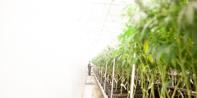 Revolution Enterprises, which operates a cultivation center in downstate Delavan, is one of 17 businesses allowed to grow medical cannabis in Illinois.