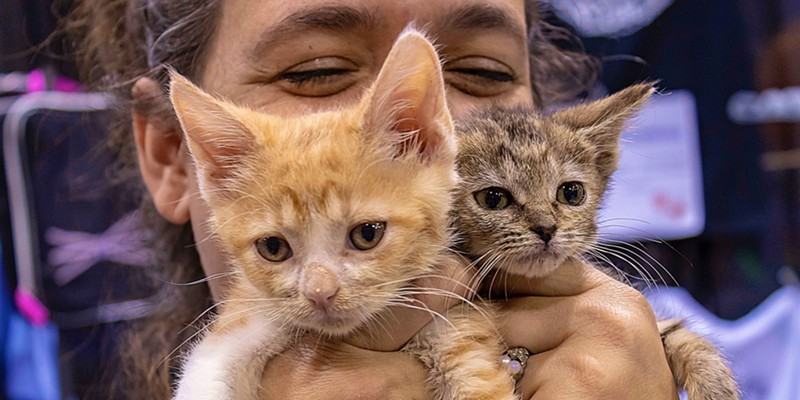 Baby siblings Whiskey and Rye with Windy Kitty Cat Cafe owner Jenny Tiner at the Meow Meetup.
