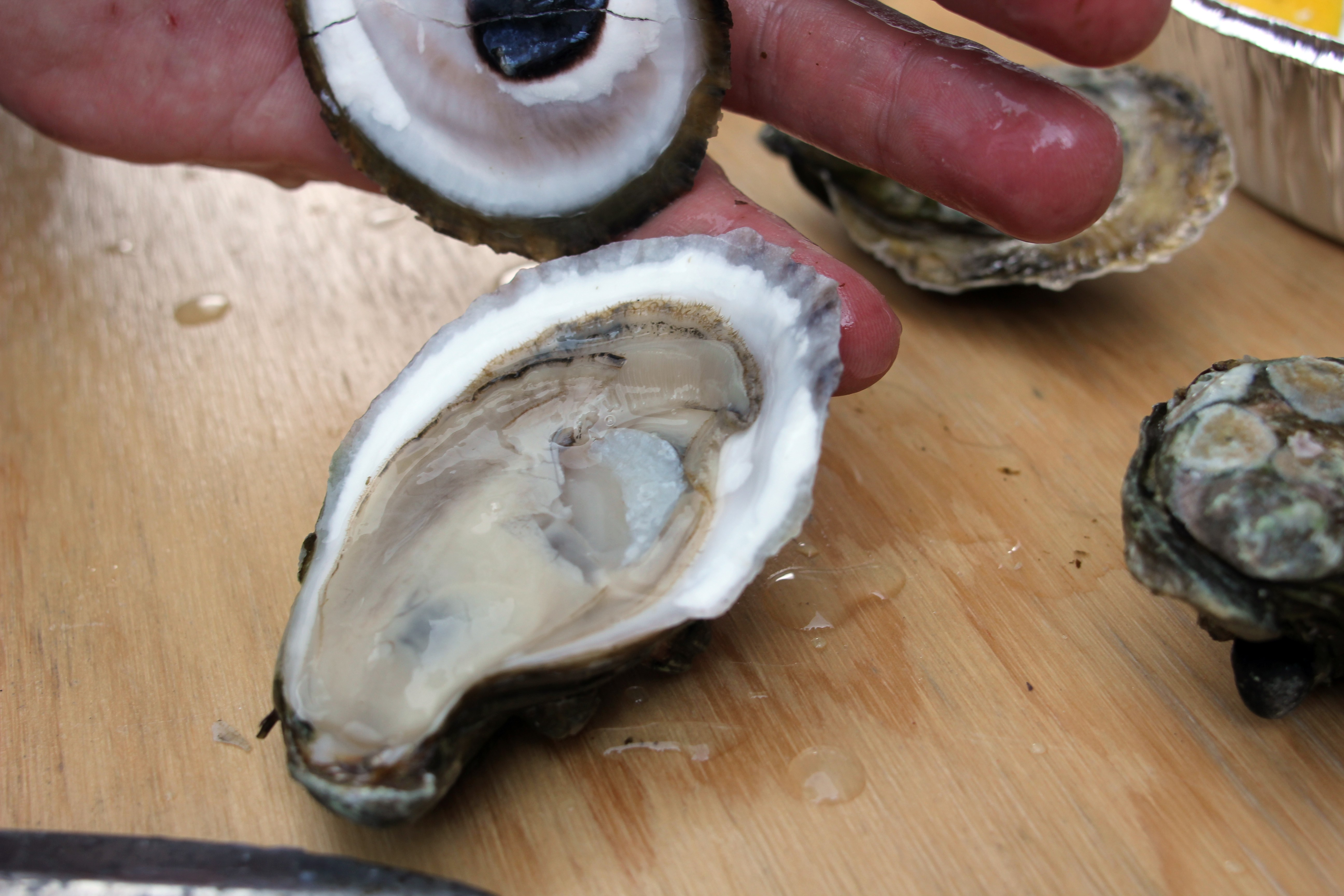 Talking and shucking with Montreal's champion oyster shucker Daniel ... U.s. Oyster Shucking Championship