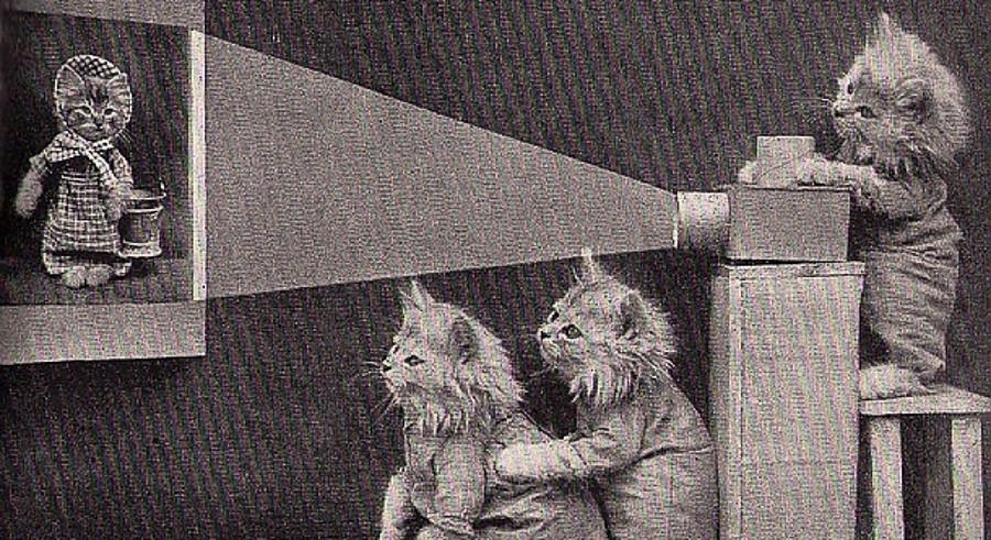 Felines take over the Music Box at CatVideo Fest on Sun 10/2. - COURTESY MUSIC BOX
