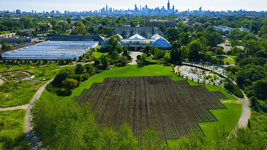 Cabbage Patch at the Garfield Park Conservatory - BRIANKINYON
