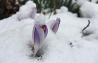 Unexpected April snowfall brings out the best of Chicago on Instagram