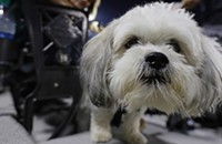 Dog Day brings the best (in show) to Guaranteed Rate Field [PHOTOS]