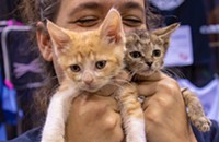 Chicago's first-ever cat convention was like catnip to fans of felines