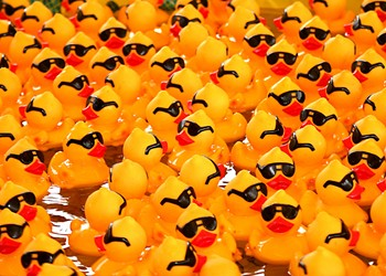 Windy City Rubber Ducky Derby, Megan Stielstra's book launch party, and more of the best things to do this week