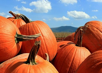 Archive dive: A report from Morton, Illinois, the self-declared pumpkin capital of the world