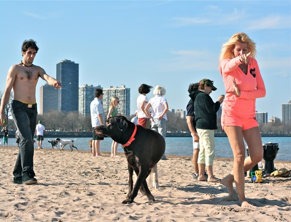 What's A Dog To Do? Montrose Beach, March. By Bill Guerriero, 43, copy editor, Andersonville - BILL GUERRIERO