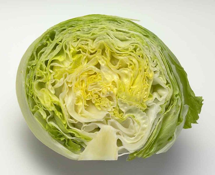 Why does lettuce make us sick?