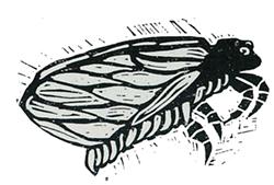 4921636c_cicada_celebration.png