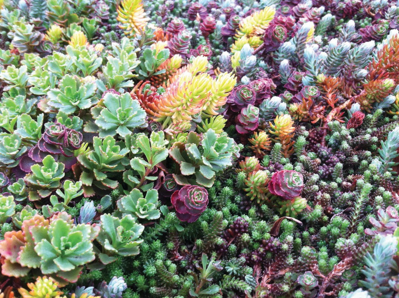 Image result for rooftop garden close up