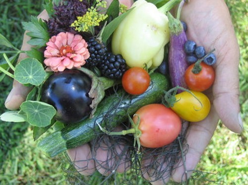 A handful of freshly-picked fruits and vegetables from Kelders Farm in Kerhonkson.