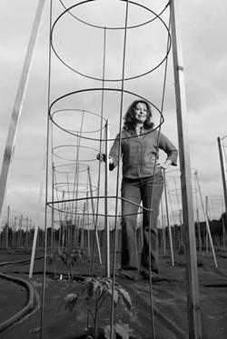 Amy Goldman among her tomato plants in Rhinebeck. - JENNIFER MAY