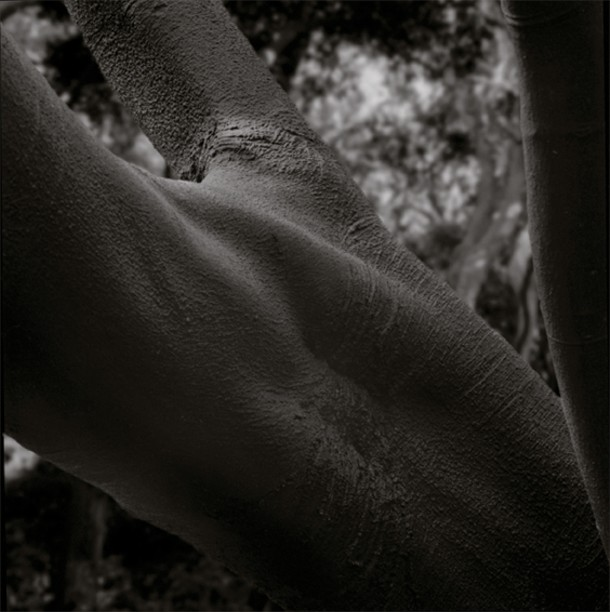 "An untitled image by Yasuhiko Ishikawa, from his ""Forbidden Forest"" series."