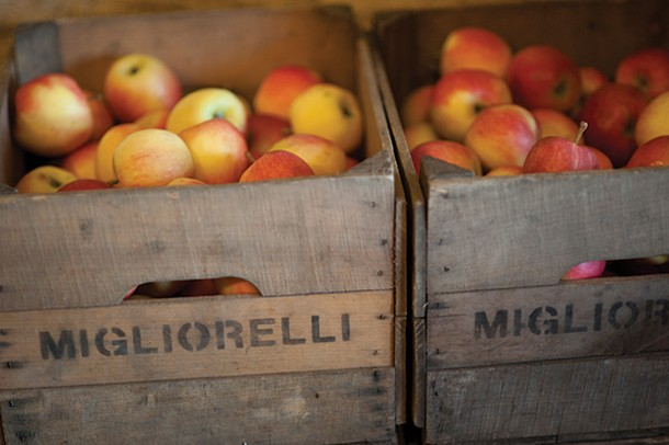 Apples from Migliorelli Farms - ROY GUMPEL