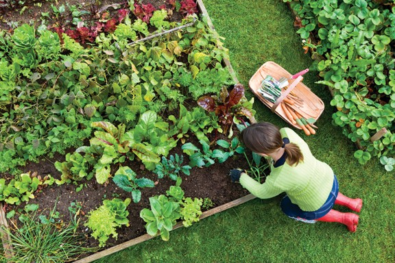 h_g--gardentips.jpg