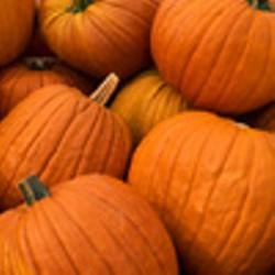 pumpkinfest_jpg-magnum.jpg