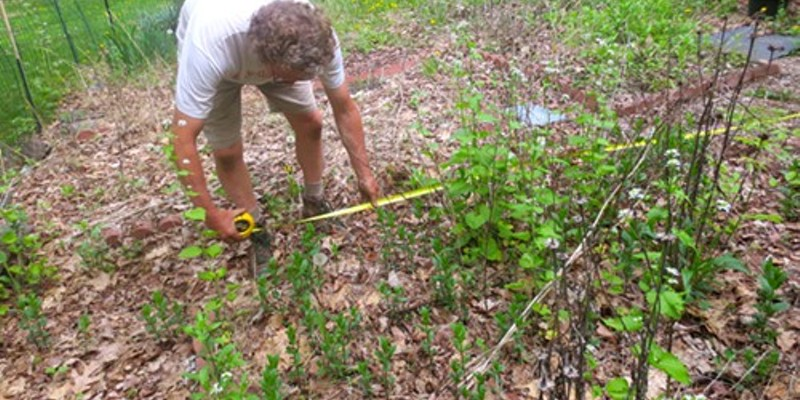 Before: Jay Levine measuring my mess of a garden: