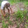 Hudson Valley Backyard Farm Re-Designs My Vegetable Garden
