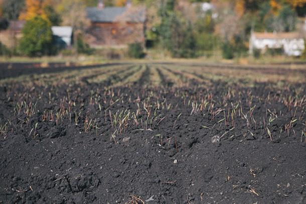 Black farm soil in Chester. - THOMAS SMITH