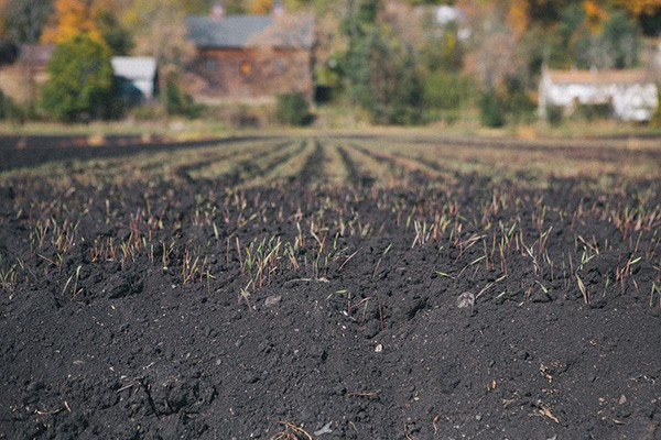 Black farm soil in Chester. - THOMAS SMITH