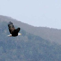 Boscobel is Eaglefest Viewing Site