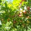 Cedar Heights Orchard in Rhinebeck