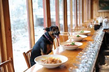 food_doggycuisine.jpg