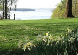 Daffodils in bloom at Wilderstein.