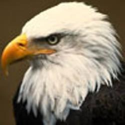eaglefest.jpg