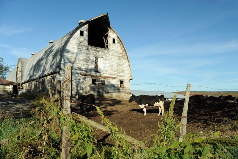 Elsa's Organics farm in Kripplebush - KELLY MERCHANT